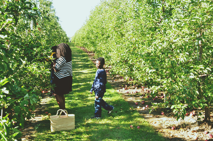 best-apple-picking-spots-near-toronto