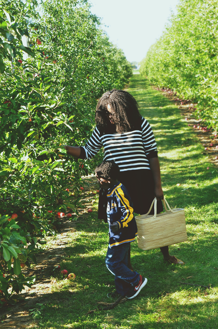 BEST APPLE PICKING SPOTS NEAR TORONTO